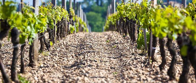 Aide aux investissement viticulteurs pour du matériel de pulvérisation environnemental